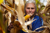 Old female farmer at corn harvest — Stock Photo