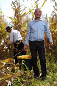 Farmers at corn harvest — Stock Photo