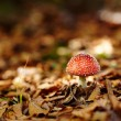 Red toadstool — Stock Photo