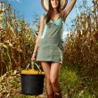 Stockfoto: Womfarmer carrying bucket of corn cobs