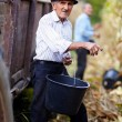 Stockfoto: Old mat corn harvest holding bucket