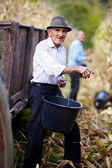 Old man at corn harvest holding a bucket — Stock Photo