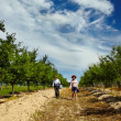 Farmers walking through orchard — Stock Photo