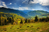Alpine landscape with pine forests — Stock Photo