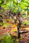 Baby beech tree with selective focus — Zdjęcie stockowe