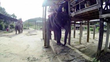 прогулка на слонах — Стоковое видео