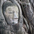 Buddha head encased in tree roots at the temple of Wat Mahatat in Ayutthaya ,Thailand. — Stock Photo #31766269