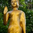 Buddha — Stock Photo #31766457