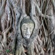 Buddha head encased in tree roots at the temple of Wat Mahatat in Ayutthaya ,Thailand. — Foto Stock