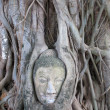 Buddha head encased in tree roots at the temple of Wat Mahatat in Ayutthaya ,Thailand. — Stock Photo #31766735