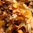 Autumn — Stock Photo #31951479