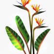 Bird of Paradise flower and stem — Imagen vectorial