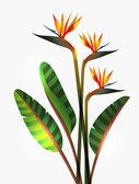 Bird of Paradise flower and stem — Stock Vector