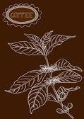 手工绘制的咖啡植物插图 — 图库矢量图片