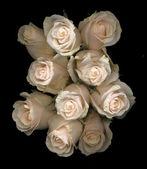 Růže na černém pozadí — Stock fotografie
