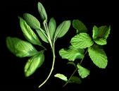 Herbs — Stock Photo