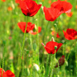 Poppies — Stock Photo #26803005