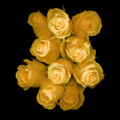 Beautiful yellow roses on black background — Stock Photo