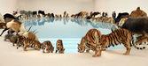 Animals — Zdjęcie stockowe