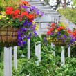 Stock Photo: Hanging flower baskets