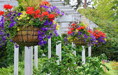 Hanging flower baskets — Stock Photo