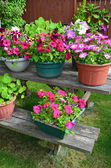 Colorful petunia planters — Foto Stock