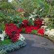 Stock Photo: Christmas botanical garden