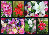 Colorful lily flower collage — Stock Photo