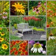 collage de jardin l'été — Photo