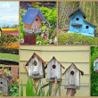 Birdhouse collage - Stock Photo
