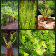Fern plant collage — Stock Photo