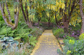 Botanical park walkway — Stock Photo