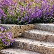 Stock Photo: Garden stairs