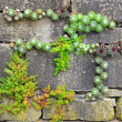 Garden wall — Stock Photo
