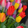 Colorful spring tulip arrangement — Stock Photo