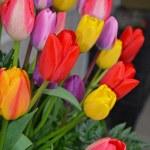Colorful spring tulip arrangement — Stock Photo