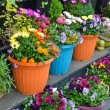 Colorful flowerpots on display — Stock Photo