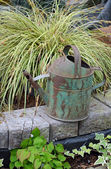 Old rusty watering can — Stock Photo