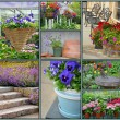 Floral garden collage — Stock Photo