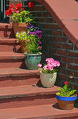 Flowerpots on old stairs — Stock Photo