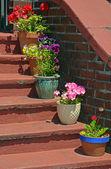 Vasi di fiori sulle vecchie scale — Foto Stock