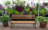Greenhouse garden bench — Stock Photo