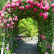 Pink rose garden archway — Stock Photo #30904585