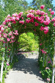 Pink rose garden archway — Stock Photo