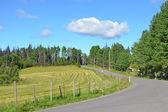 夏の田舎道 — ストック写真