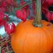 Pumpkin and autumn leaves — Stock Photo
