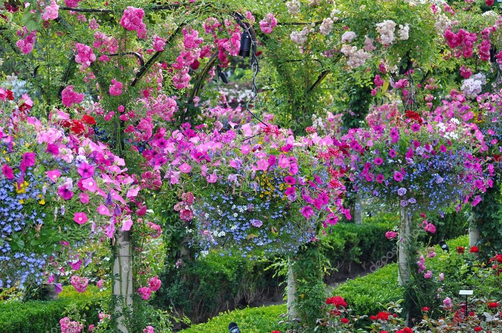 jardini res p tunia color s photographie montana 35855841. Black Bedroom Furniture Sets. Home Design Ideas