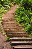 Stairway in the forest — Stock Photo