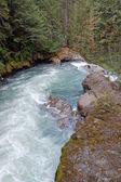 Pacific northwest rivier — Stockfoto