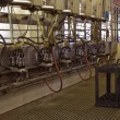 Milking parlor — Stock Photo